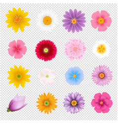 Summer flowers set transparent background vector
