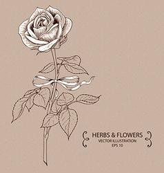 Vintage White Rose vector image