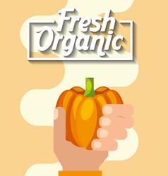 agriculture plantation vegetable pumpkin vector image
