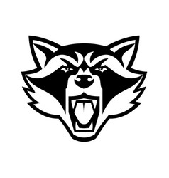 head angry north american raccoon front view vector image