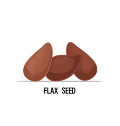 Ripe flax seeds brown linseed organic healthy vector