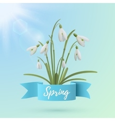 Spring background template with snowdrop flowers vector