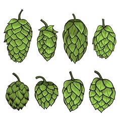 Hand drawn Hops set vector image vector image