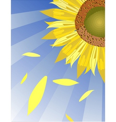 sun flower background vector image vector image