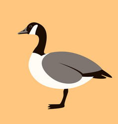 canadian goose flat style vector image