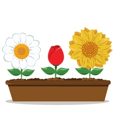 pot with different flowers vector image