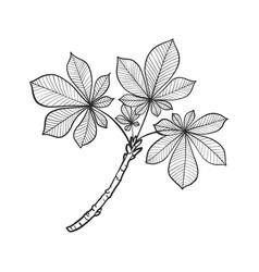 Twig with leaves vector