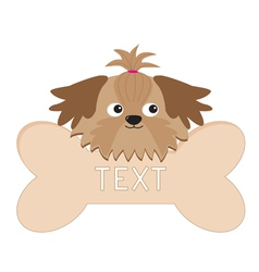 Glamour Shih Tzu dogs head and big bone Isolated vector image vector image