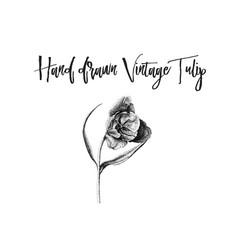 watercolor vintage tulip vector image