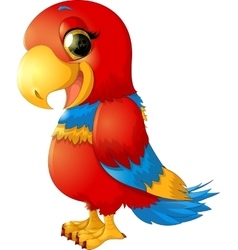 cheerful red parrot vector image