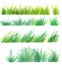 grass painted elements vector image