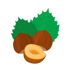 Hazelnut cartoon forest natural nut organic ripe vector