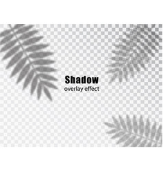shadows overlay transparent effect leaves vector image