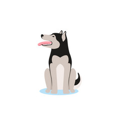 siberian husky dog sitting on the snow vector image