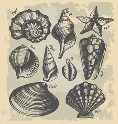vintage drawing sea shells vector image