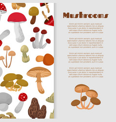 Fresh autumn mushrooms and toadstools vector