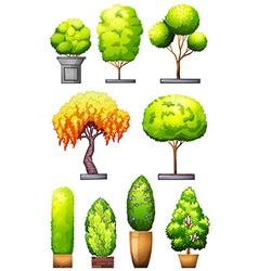 Sets of decorative plants vector image