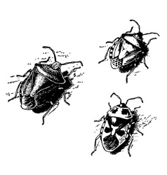 Shield bug vector