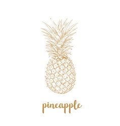 pineapple sketch vector image