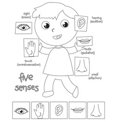 Five senses boy coloring vector