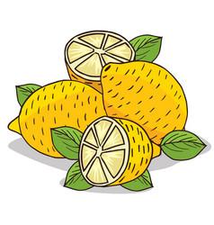Isolate ripe lemon fruit vector