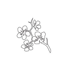 one single line drawing beauty fresh cherry vector image