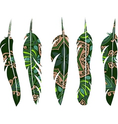 Set of decorative animals feathers vector image