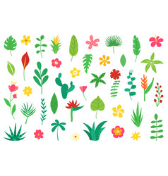 Tropical flowers and leaves collection exotic vector