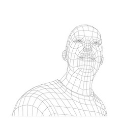 wire frame mans head vector image