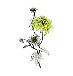 hand drawn green flower isolated on white vector image
