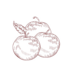 Juicy whole apples realistic vector