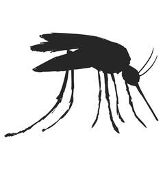 Mosquitoe vector