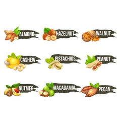 Nuts logo set labels with macadamia pecan vector