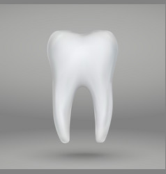 3d tooth isolated vector
