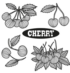 hand drawn cherry fruits vector image