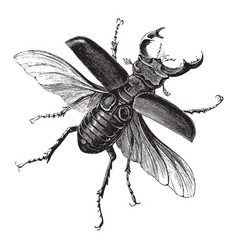 Male stag beetle vintage vector