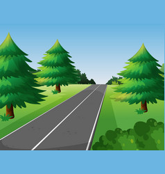 scene with pine trees along the road vector image