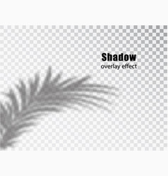 Shadows overlay transparent effect leaves vector