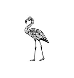 Stork flamingo logo design inspiration vector
