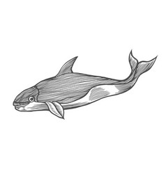 Whale water animal engraving vector