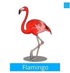 Flamingo learn birds educational game vector image vector image