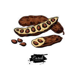 carob superfood drawing isolated hand vector image
