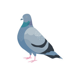 Cute pigeon flat city bird vector