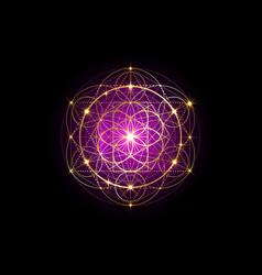 Seed life golden sacred geometry mystic mandala vector