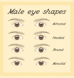 various male eye shapes vector image