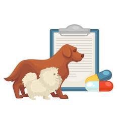 pet vet veterinary doctor animal clinic dog cat vector image