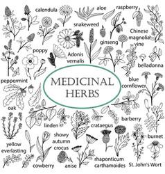 set of hand-drawn of medicinal herbs vector image