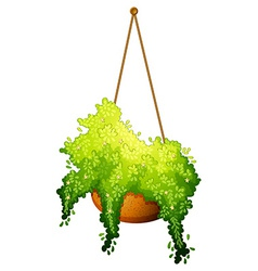 A hanging plant vector