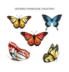 Butterfly collection design with watercolor vector