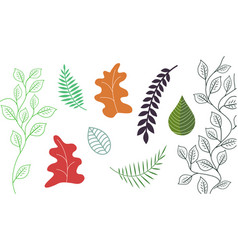 Collection abstract leaves design vector